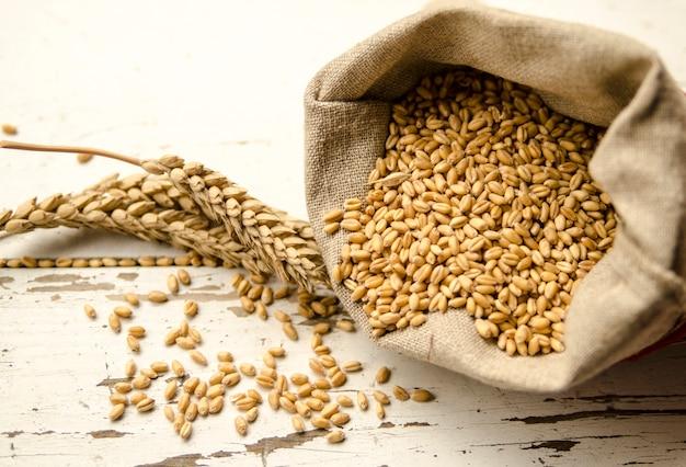 Semilla de la fila del trigo en bolso de la tela y cereal de la planta en el tablero blanco.