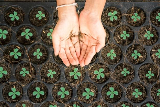 Semilla de flor en la mano sobre las bandejas de la guardería para plantar el árbol, concepto del ambiente