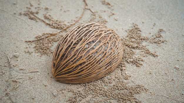 Semilla de palma seca en la playa de arena