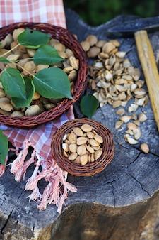 Semillas de albaricoque secas