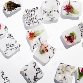Semillas y flores en bloques de hielo.