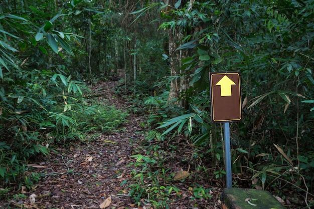 Señal de rastro de madera vieja marrón en bosque de pinos