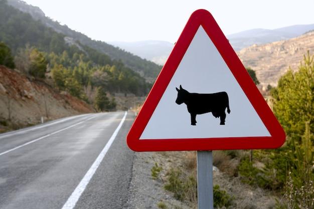 Señal de tráfico europea, vacas en la carretera.