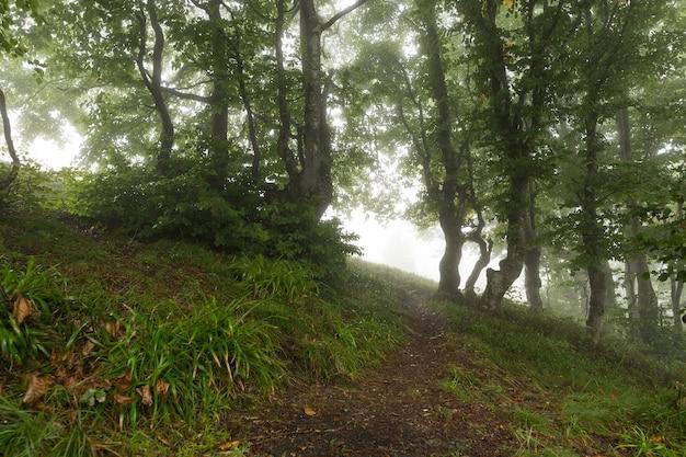 Sendero en los bosques de la mañana que se desvanecen en la niebla de la mañana