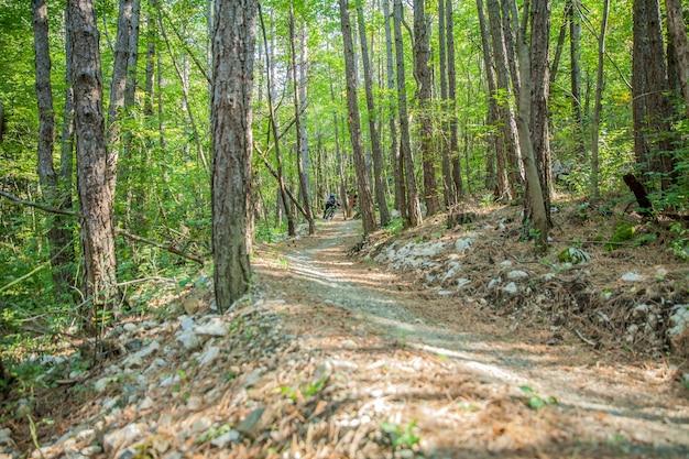 Sendero cuesta abajo con delgados troncos de árboles en un bosque