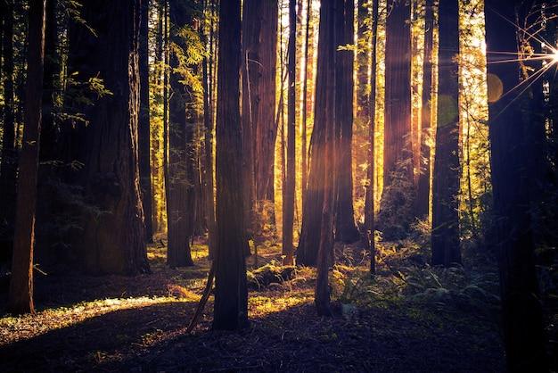 Sendero misterioso del bosque