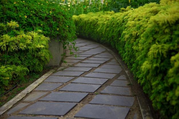 El sendero pavimentado entra en el parque entre arbustos verdes.