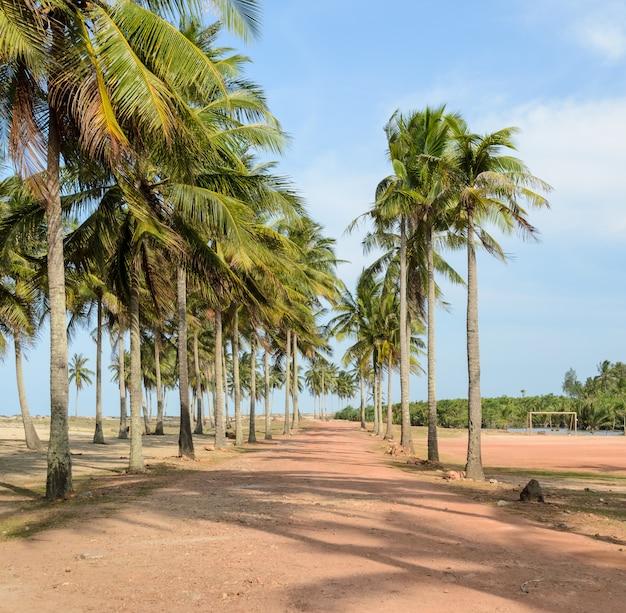 Sendero a la playa tropical con cocoteros.
