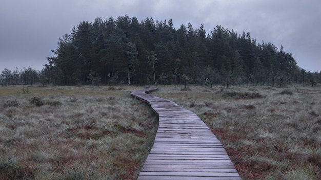 Sendero de suelos de madera en el pantano en otoño