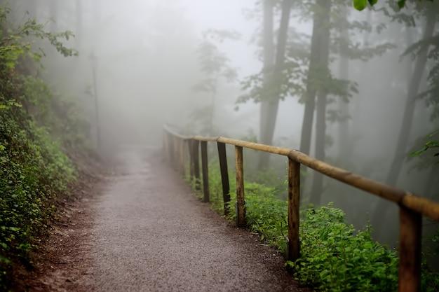 Sendero con valla de madera que atraviesa un bosque misterioso oscuro y brumoso.