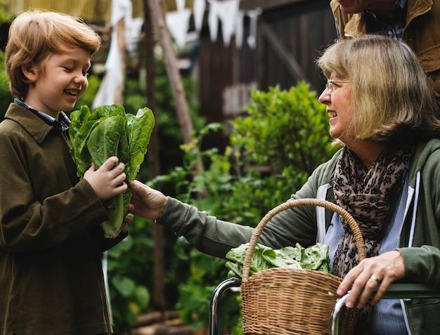 Senior pareja con niño plantando verduras en el jardín patio trasero