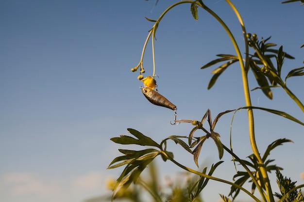 Señuelo de la pesca que cuelga en la planta de flor amarilla contra el cielo