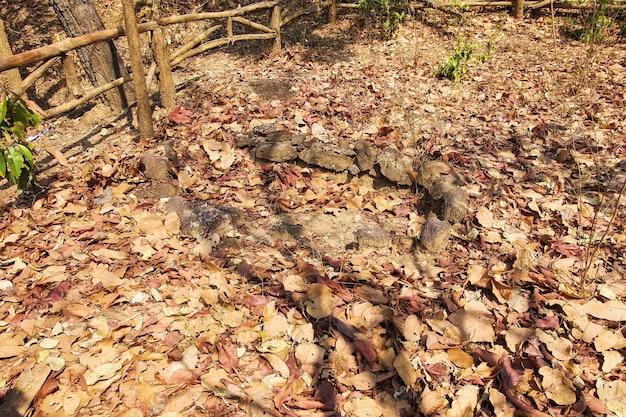 Sepulcro antiguo hecho de piedra en el parque nacional de op luang, caliente, chiang mai, tailandia.