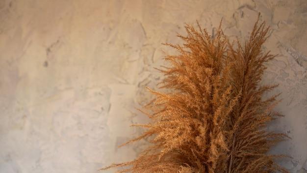 Seque las ramas de los juncos en el interior. decoración de la habitación de estilo escandinavo sobre un fondo gris