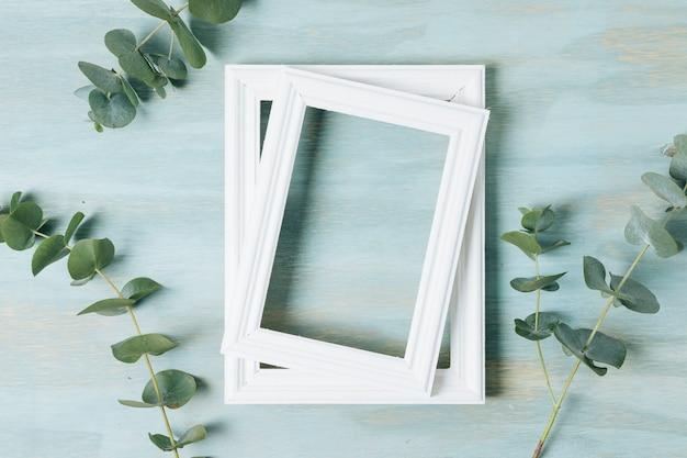 Seque las ramitas de hojas verdes cerca del marco de borde blanco vacío sobre fondo de textura