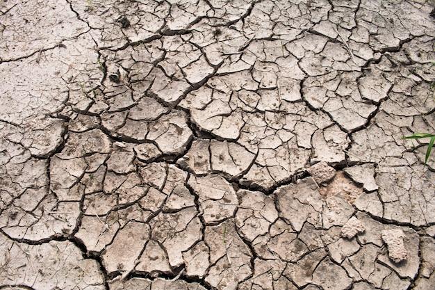 Sequía en los campos de arroz, concepto de sequía.