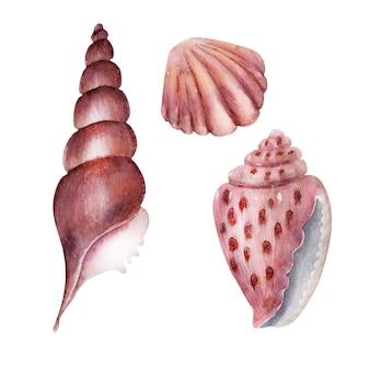 Set de acuarela delicadas conchas de mar rosa