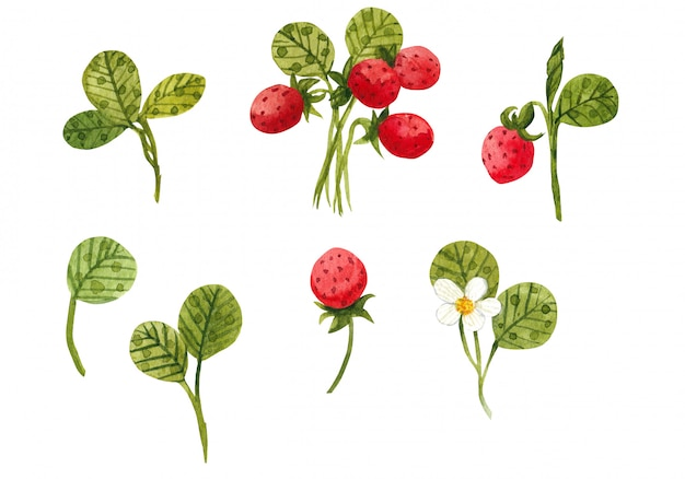 Set acuarela de verano con fresas.