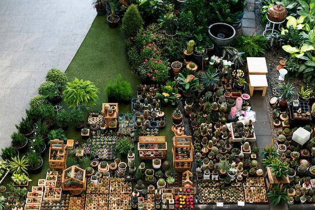 Set de decoración de la colección cactus houseplant