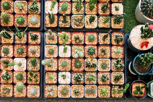 Set de decoración de colección de plantas de interior de cactus