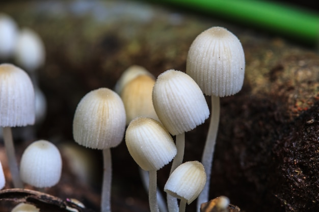Setas que crecen en un árbol vivo