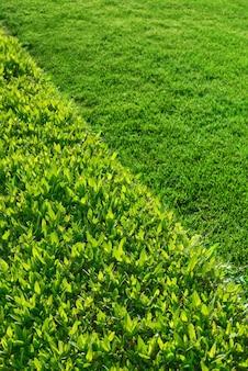 Seto verde arbusto y pared de hierba