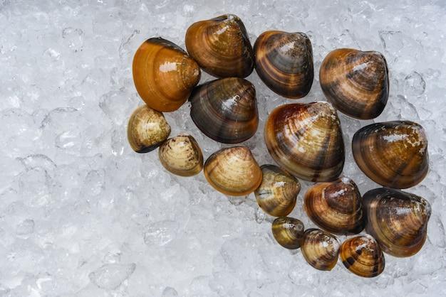 Shell de esmalte de mariscos mariscos almejas en un cubo de hielo en el supermercado