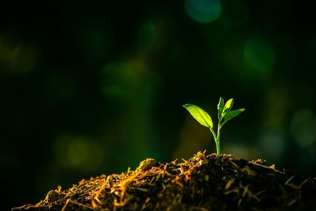 La siembra está creciendo en el suelo con el telón de fondo de la luz solar.