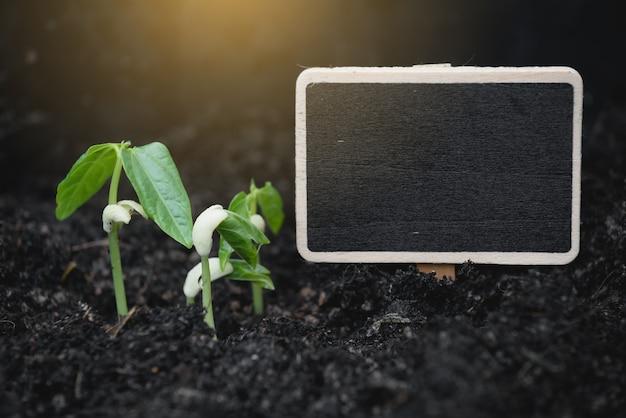 Signo de pizarra y nueva planta que crece fuera del suelo, agricultura