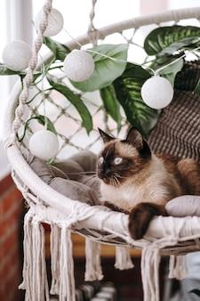 Silla de mimbre en el balcón en estilo boho con un gato siamés