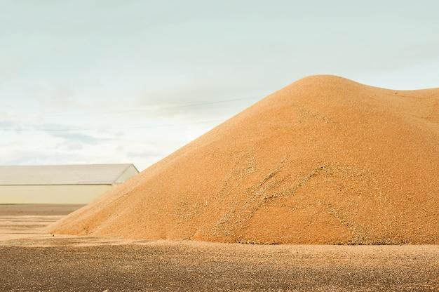 Silos de almacenamiento de grano. concepto de cosecha de grano, trigo, centeno, cebada, maíz, colza.