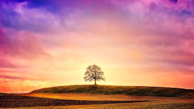 Silueta, de, árbol, en, campo verde
