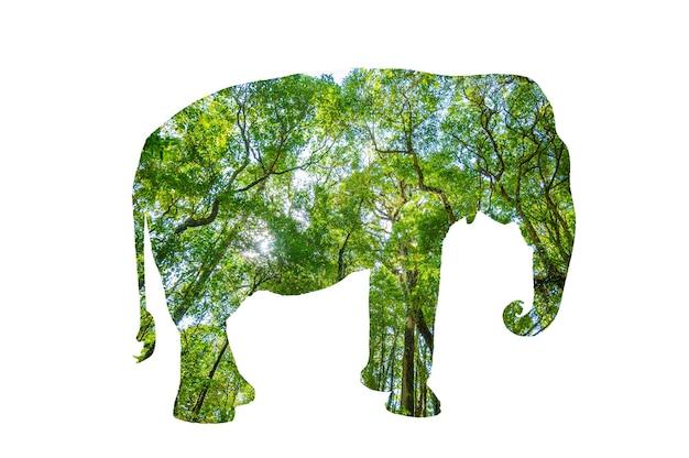 Silueta del bosque del día mundial de la vida silvestre en la forma de un concepto de conservación de la vida silvestre y los bosques de animales salvajes