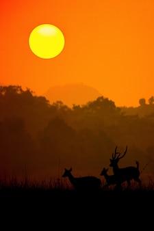Silueta de un ciervo de ciervo rojo en la niebla