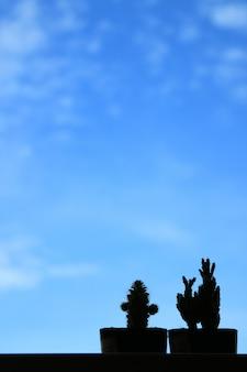 Silueta de dos mini cactus contra el cielo azul vivo, fondo borroso