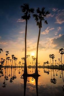 Silueta de la granja de palmeras de azúcar al amanecer con la reflexión del horizonte sobre el agua, dongtan sam khok, pathum thani, tailandia. paisaje natural vertical para el fondo del teléfono inteligente móvil.
