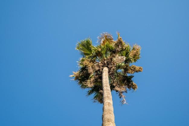 Silueta de palmera en cielo azul