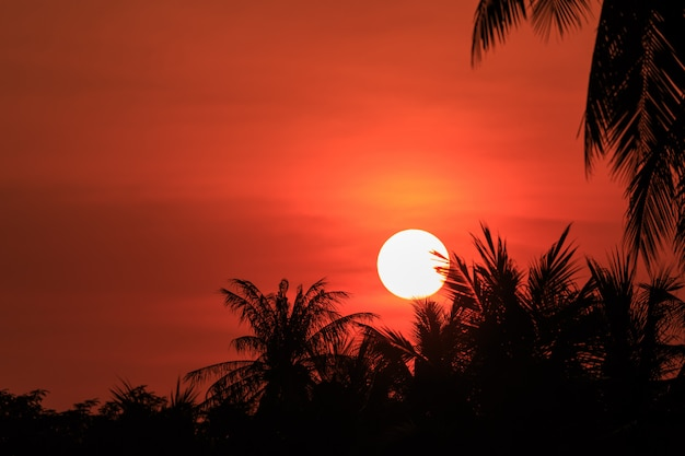 Silueta de la palmera de los cocos en puesta del sol. concepto para la temporada de verano