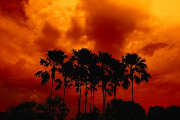 Silueta de palmeras altas en el cielo nocturno naranja rojo oscuro.