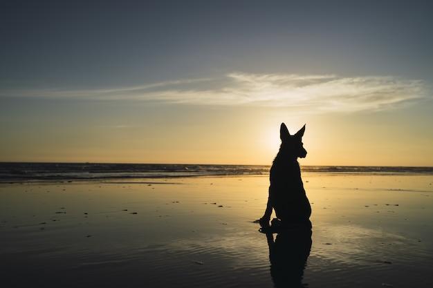 Silueta de un perro grande sentado en la costa y la puesta de sol sobre el mar
