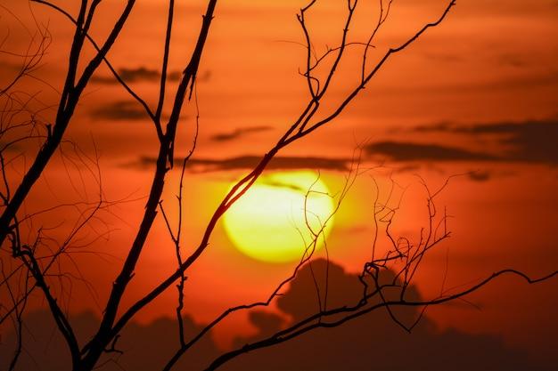 Silueta de la rama de árbol con la puesta del sol, fondo de halloween.
