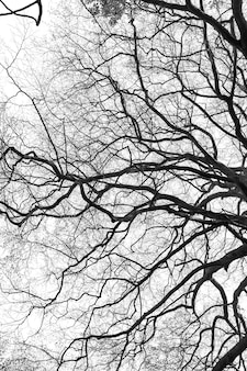 Silueta de rama de árbol sobre fondo blanco