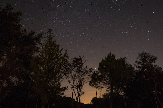 Siluetas de árboles bajo un cielo estrellado durante la noche.