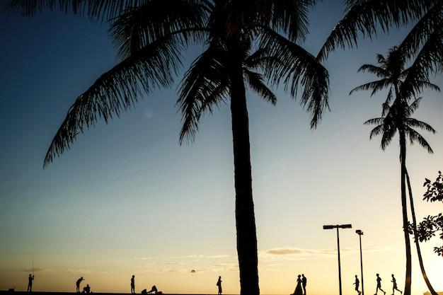 Siluetas de recién casados caminando de palmeras en la costa del océano