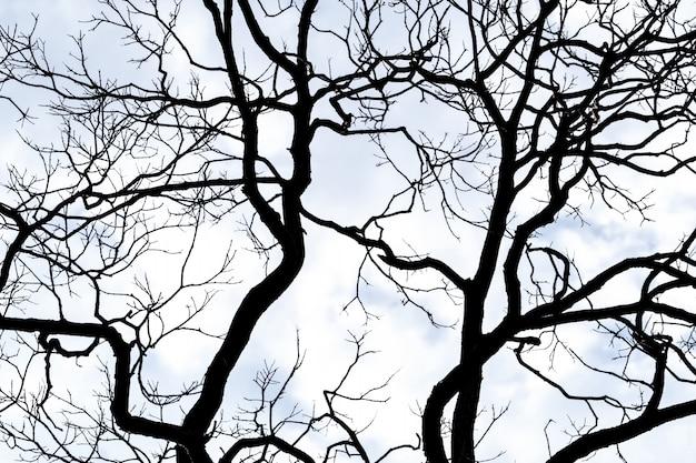 Siluetee el árbol muerto en el fondo blanco del cielo y de las nubes para la muerte y la paz