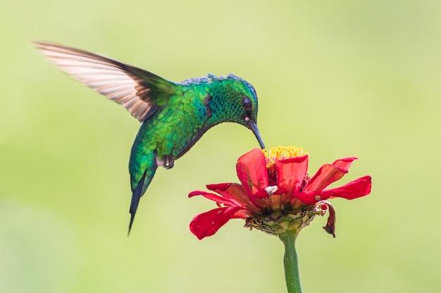 Simbiosis del colibrí y la flor.