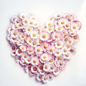 Símbolo de amor de flor de margarita en blanco