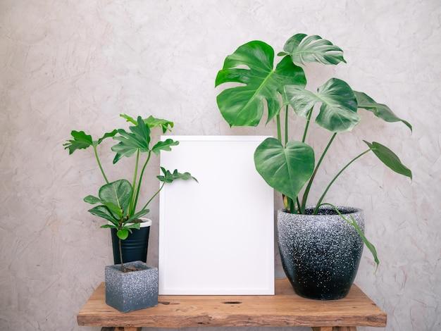 Simulacros de marco de madera de cartel y monstera philodendron y planta de caucho planta de casa tropical botánica en hermosa maceta de hormigón en mesa de madera