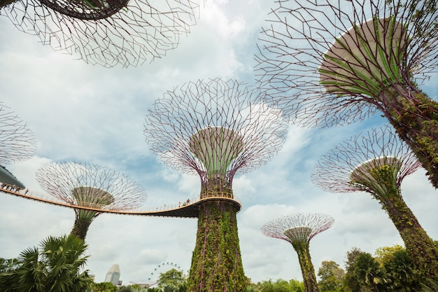 Singapur supertrees en el jardín de la bahía.