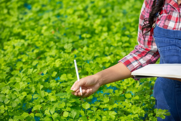 Sistema de hidroponía, siembra de vegetales y hierbas sin usar tierra para la salud.